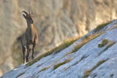 The Serranía de Ronda's mountainous terrain and relative inaccessibility have created pristine pockets of wildlife paradise